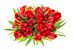 Red tulips. Colorful spring flowers Stock Photography
