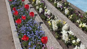 Red tulips. Cornflowers and hyacinths stock footage