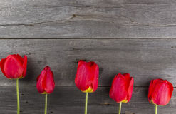 Red tulips on a dark wooden background Stock Photo