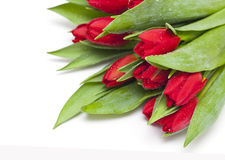 Red tulips with droplets Royalty Free Stock Photos