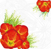 Red tulips floral  background Royalty Free Stock Photos