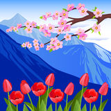 Red tulips and a flowering branch against the backdrop of the mountains. Vector Illustration. Alpine meadows. Tulip flowers Royalty Free Stock Image