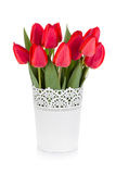 Red tulips in flowerpot Royalty Free Stock Photo