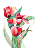 Red Tulips flowers. Watercolor illustration Stock Photography
