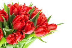Red tulips. Flowers bouquet on white Stock Photography