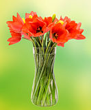 Red tulips flowers, floral arrangement (bouquet), in a transparent vase, green gradient background Stock Image