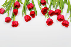 Red tulips flowers on light background. High top view. Tender red tulips flowers on light background. High top view Royalty Free Stock Images