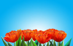 Red tulips. Flowers on light blue sky background. Digital illustration. Wallpaper royalty free illustration