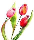 Red Tulips flowers Royalty Free Stock Photos