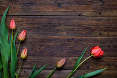 Red tulips flowers on wooden background. Top view, copy space. Royalty Free Stock Photography