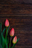 Red tulips flowers on wooden background. Top view, copy space. Stock Photo
