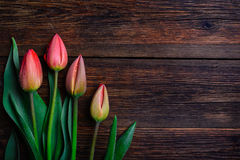 Red tulips flowers on wooden background. Top view, copy space. Stock Image