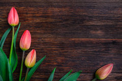 Red tulips flowers on wooden table. Top view, copy space. Royalty Free Stock Photo