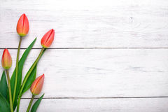 Red tulips flowers on wooden table. Top view, copy space. Royalty Free Stock Photography