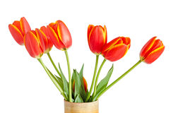 Red tulips flowers with yellow stripes, colored flowerpot, vase, Stock Photo
