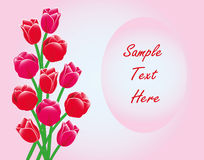 Red Tulips Frame Card With Text. Elegant holiday card frame pattern of red tulips on a pink background. Have the opportunity to write and edit the congratulatory Royalty Free Stock Images