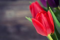 Red  tulips in front of wooden background Stock Photography