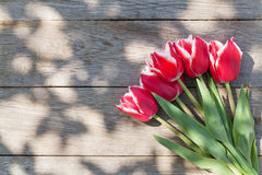 Red tulips on garden table Royalty Free Stock Images
