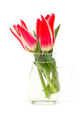 Red tulips in glass vase Royalty Free Stock Photography