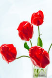 Red tulips in a glass vase in backlit. The background is blurred Stock Images