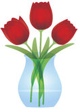 Red Tulips in Glass Vase Illustration Royalty Free Stock Image