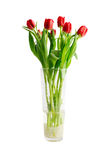 Red tulips in a glass vase Stock Image