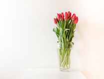 Red tulips in glass vase Royalty Free Stock Photo