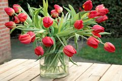 Red tulips in a glass vase,. With raindrops, on a wooden garden table Stock Photography