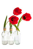 Red tulips in the glass Royalty Free Stock Images