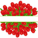 Red tulips. Gradient meshes. Stock Photos