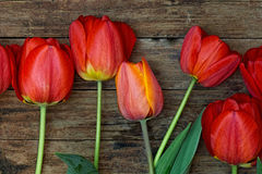Red tulips with green leaves lie on the rough wooden background Royalty Free Stock Images