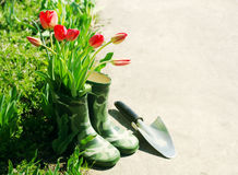 Red tulips in green rubber boots for children in the garden on a sunny spring day. Stock Photos