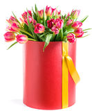 Red tulips in a hat box, isolated on white background royalty free stock images