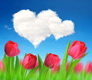 Red tulips with heart from clouds. Stock Image
