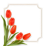 Red tulips on a light background with border. Red tulips. Frame for text. White background. The template for the congratulations for the various greetings Stock Photos