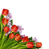 Red tulips and lilac flowers bouquet in a corner Royalty Free Stock Image