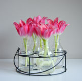 Red tulips in little vases Stock Images