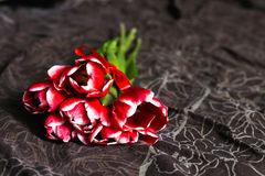 Red tulips lying on bed brown Stock Photography