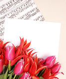 Red tulips with music sheet page. Beautiful red tulips with music sheet page and congratulatory blank Royalty Free Stock Photos