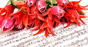 Red tulips with music sheet page Stock Photo