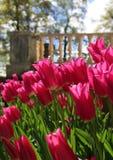 Red tulips near garden terrace Stock Photos