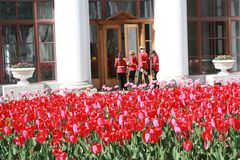 Red tulips near the Palace in  Petersburg stock images