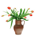 Red tulips in old fashioned jug isolated on white Stock Images