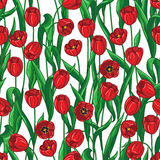 Red tulips pattern Stock Photos