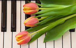 Music and flowers Stock Image