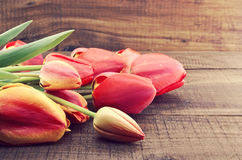 Red tulips on rustic wooden background. Spring flowers. Spring b royalty free stock images