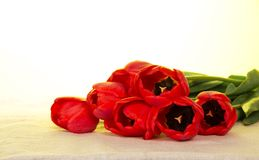 Red tulips on a sackcloth Royalty Free Stock Photo