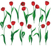 Red tulips set Royalty Free Stock Image