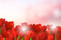 Red tulips on shiny background. Spring nature motive. Vector illustration Stock Photography