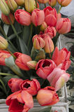 Red tulips. In the spring Royalty Free Stock Images